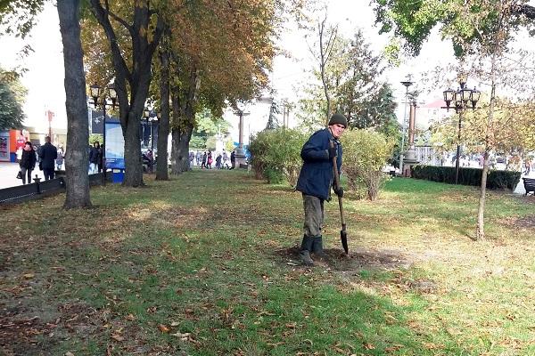 У Тернополі висадили екзотичні дерева (Фото)