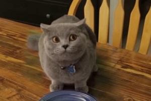 Найрозумніший і найсмішніший кіт, якого можна побачити в Інтернеті (Відео)