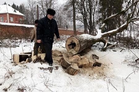 На Бережанщині скоро може зникнути унікальна пам'ятка природи XVII століття (Відео, Фото)