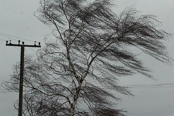Штормове попередження: 1 березня на Тернопільщині сильний вітер