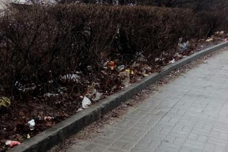 Головна студентська вулиця Тернополя перетворилася на свинарник