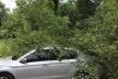 Тернополяни чекали кілька годин, поки забирали дерево, що впало на їхні автомобілі (Фото)