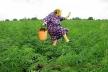 На Тернопільщині виявили 7 посівів маку і конопель