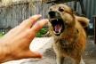 Власні собаки на смерть загризли чоловіка на Львівщині