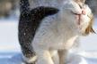 Найближчим часом сніг повернеться, – прогноз синоптиків