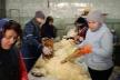 На Тернопільщині квасять капусту для бійців