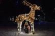 Райцентр на Тернопільщині перетворили на різдвяну казку (Відео)