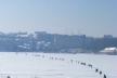 На тернопільському ставі з'явилися перші «пінгвіни» (Відео)
