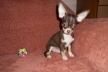 Тернополянам за догляд за собачкою пропонують дві місячні зарплати