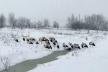 На Тернопільщині люди рятують лелек від голоду (Відео)