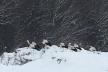 На Тернопільщині птахи потребують допомоги: Рятували лебедів – врятуємо і лелек