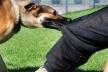 У Тернополі проводять безкоштовну вакцинацію тварин