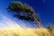 Штормове попередження: 21 квітня на Тернопільщині сильний вітер