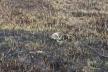 Неподалік Тернополя селяни заживо спалили (Фото)