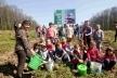 У Борщівському лісництві діти висадили 320 саджанців дуба (Фото)