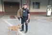 Тернопільські патрульні розшукують господаря агресивної собаки