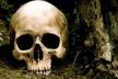 Селфі з останками. У Ланівцях четверо підлітків викрали череп з місця розкопок