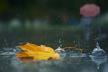 Який день сьогодні, 22 вересня очікує на тернополян