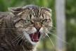 На Тернопільщині скажений кіт накинувся на свою хазяйку
