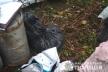 В жительки Зборівського району поліцейські вилучили бідон коноплі