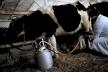 Аграрна Тернопільщина: Вістрянське молоко