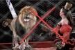 Уряд України підтримав заборону використання тварин в цирках