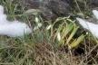 Весна близько: на Тернопільщині розквітають первоцвіти