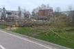 Варвари, які позрізали старі тополі по вулиці Білецькій в межах парку Шевченка будуть покарані