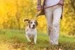 Тернополяни хочуть, щоб у місті були спеціально відведені місця для вигулу тварин