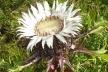 Дивовижна реліктова рослина зацвіла на Тернопільщині