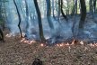 Під Бережанами третю добу горить ліс