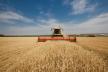 Тернопільські фермери можуть збирати на 15-25% більші врожаї