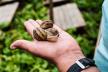 Молоде подружжя з Тернопілля планує цьогоріч експортувати три тонни равликів із власної ферми (Відео)