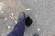 «Скоро хтось зламає ногу»: у Зборові скаржаться на жахливі тротуари (Фото)