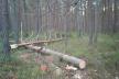 Житель Теребовлянського району продавав деревину, крадену з лісу
