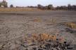 Рівень води в українських річках найнижчий за останні 100 років: чим це загрожує?