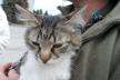 У день «Обійми свого кота» тернополянка закликала всиновлювати бездомних котиків