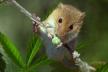 Під час судового засідання з'ясувалось, що речовий доказ з'їли миші