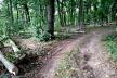 Мешканці Тернопільщини нелегально вирубували та збували деревину