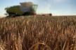 «Контінентал Фармерз Груп» розпочала збір ранніх зернових
