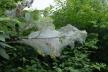 На Тернопільщині виявили небезпечного шкідника