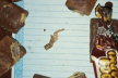 На Тернопільщині жінку розлютили цукерки з черв'яками