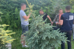 На Тернопільщині на отриманні понад 14 тис грн хабара викрито працівника державного лісового підприємства
