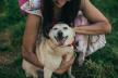 Загубившийся собачка знайшовся за півгодини - допоміг жетон з телефоном власниці та QR-кодом