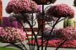 У Тернополі провели вертикальне озеленення парків