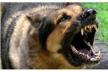 На Тернопільщині вівчарка накинулася на дитину
