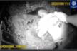 У Тернополі чоловік потрапив під теплотяг: медики госпіталізували потерпілого (Відео)