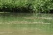 Житель Бучача зняв на відео, як у річку Стрипу зливають нечистоти