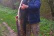 Вагою понад 25 кг: на Тернопільщині рибалка впіймав велетенського сома
