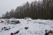 В одному із ботанічних заказників Тернопільщини незаконно вирубали понад 200 дерев